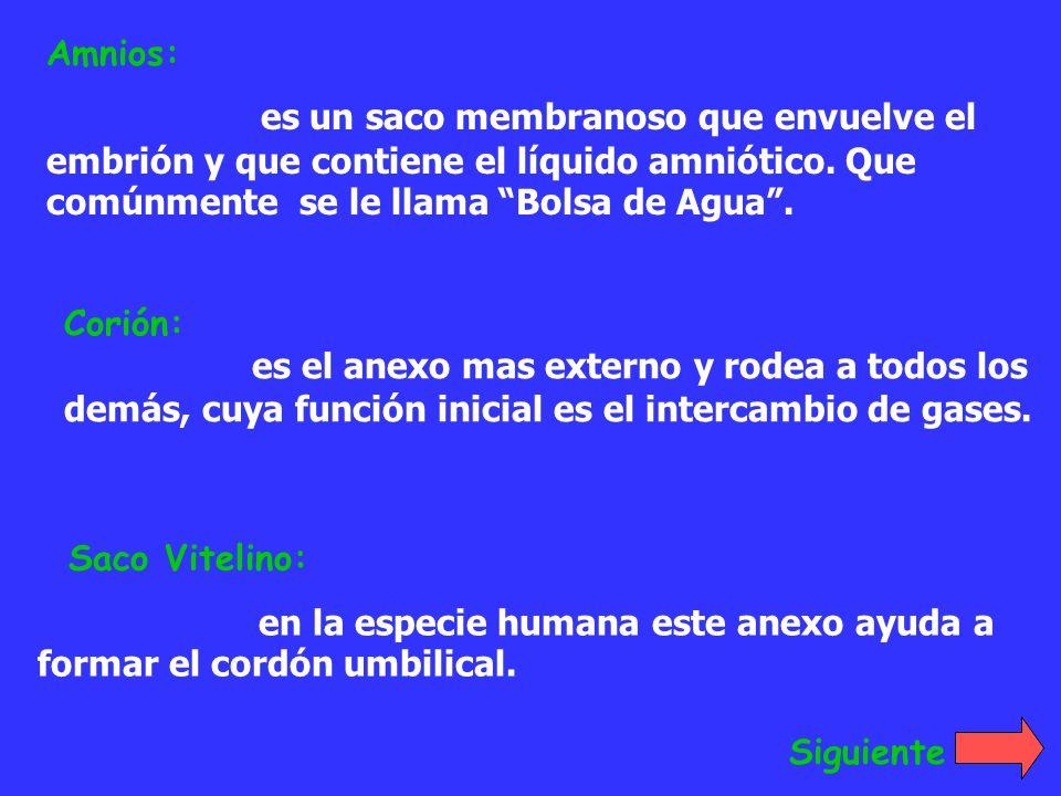 Amnios: es un saco membranoso que envuelve el embrión y que contiene el líquido amniótico. Que comúnmente se le llama Bolsa de Agua. Corión: es el ane