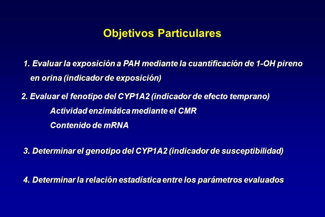 2. Evaluar el fenotipo del CYP1A2 (indicador de efecto temprano) Actividad enzimática mediante el CMR Contenido de mRNA Objetivos Particulares 1. Eval