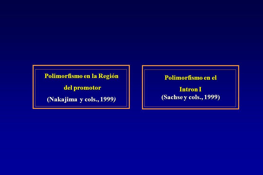 Polimorfismo en la Región del promotor del promotor (Nakajima y cols., 1999) Polimorfismo en el Intron I (Sachse y cols., 1999)