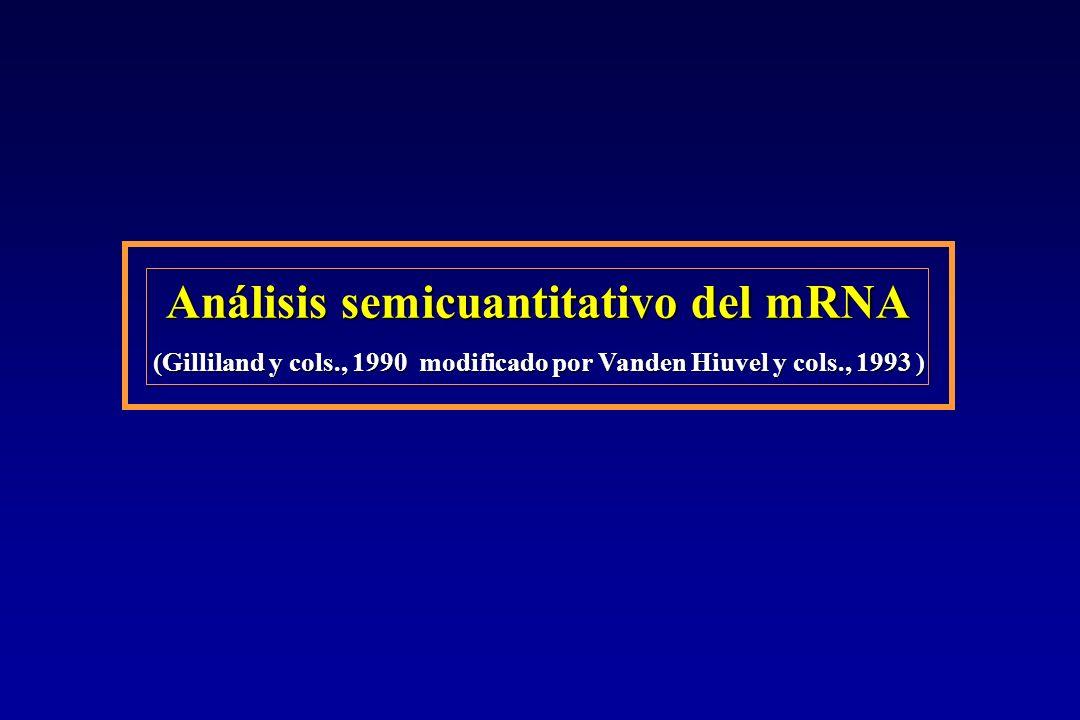Análisis semicuantitativo del mRNA (Gilliland y cols., 1990 modificado por Vanden Hiuvel y cols., 1993 )