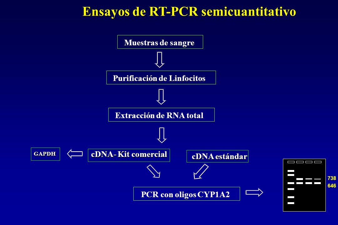 Muestras de sangre Extracción de RNA total PCR con oligos CYP1A2 Purificación de Linfocitos 646 738 Ensayos de RT-PCR semicuantitativo cDNA- Kit comercial cDNA estándar GAPDH