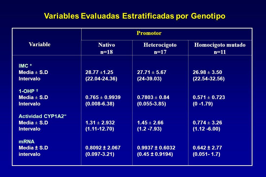 Variables Evaluadas Estratificadas por Genotipo Nativo n=18 Heterocigoto n=17 Homocigoto mutado n=11 IMC + Media ± S.D Intervalo 1-OHP Media ± S.D Intervalo Actividad CYP1A2 Media ± S.D Intervalo mRNA Media ± S.D intervalo 28.77 ±1.25 (22.04-24.36) 0.765 ± 0.9939 (0.008-6.38) 1.31 ± 2.932 (1.11-12.70) 0.8092 ± 2.067 (0.097-3.21) 27.71 ± 5.67 (24-39.03) 0.7803 ± 0.84 (0.055-3.85) 1.45 ± 2.66 (1.2 -7.93) 0.9937 ± 0.6032 (0.45 ± 0.9194) 26.98 ± 3.50 (22.54-32.56) 0.571 ± 0.723 (0 -1.79) 0.774 ± 3.26 (1.12 -6.00) 0.642 ± 2.77 (0.051- 1.7) Variable Promotor Promotor