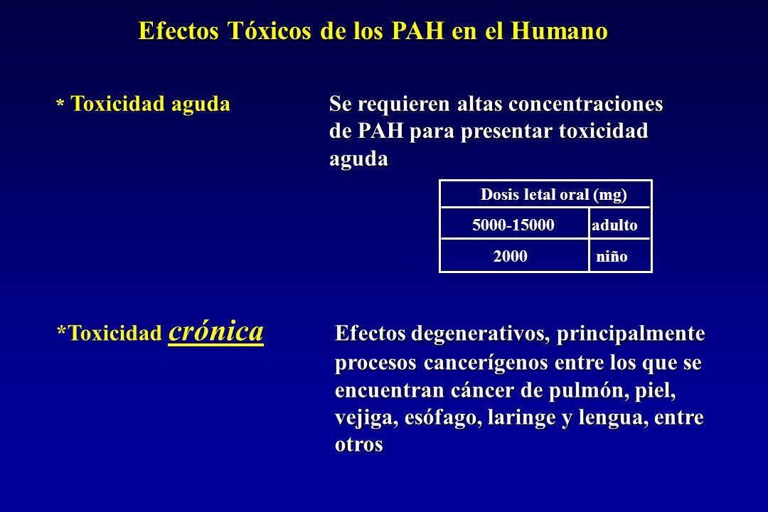 Efectos Tóxicos de los PAH en el Humano Dosis letal oral (mg) 5000-15000 adulto 2000 niño Se requieren altas concentraciones * Toxicidad aguda Se requieren altas concentraciones de PAH para presentar toxicidad aguda Efectos degenerativos, principalmente procesos cancerígenos entre los que se encuentran cáncer de pulmón, piel, vejiga, esófago, laringe y lengua, entre otros *Toxicidad crónica Efectos degenerativos, principalmente procesos cancerígenos entre los que se encuentran cáncer de pulmón, piel, vejiga, esófago, laringe y lengua, entre otros
