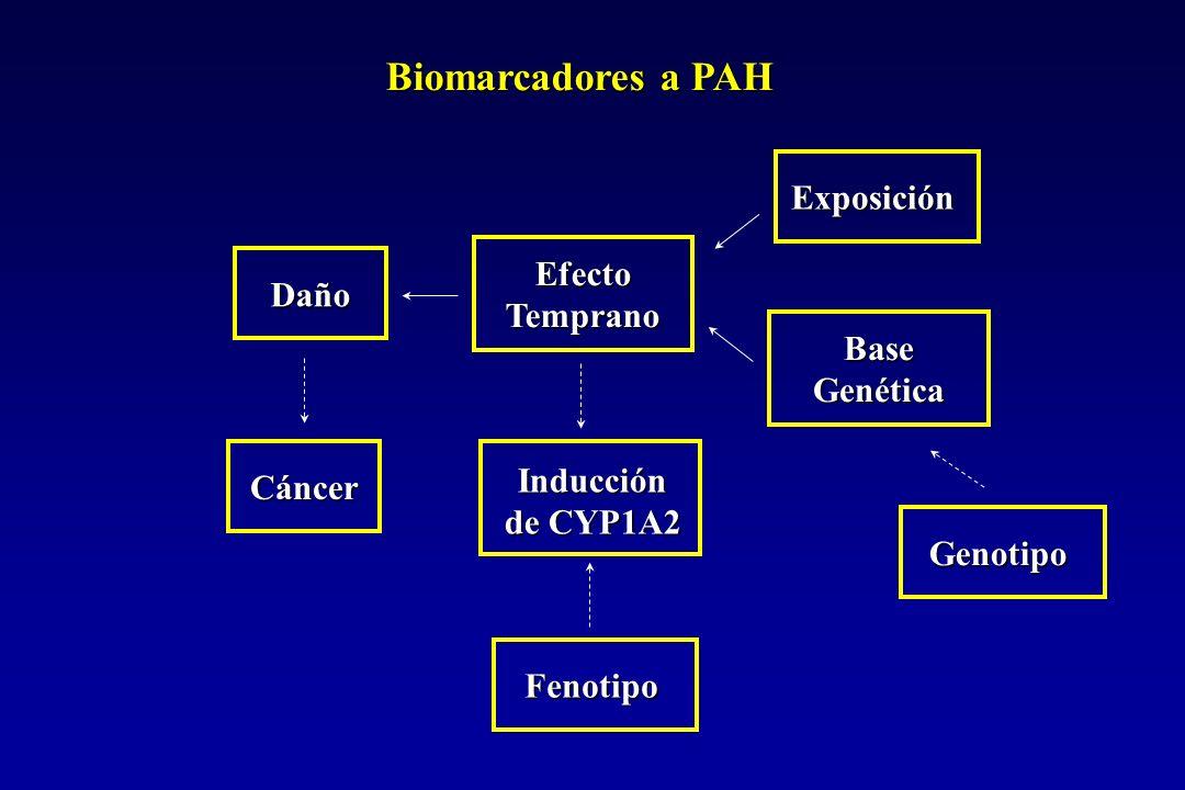 Polimorfismo Genético del CYP1A2 MutaciónFrecuencia%EfectoReferencia Región del promotor -2964 ( n=116) 77 G/G 18 G/A 5 A/A Actividad Nakajima y cols.,1999.