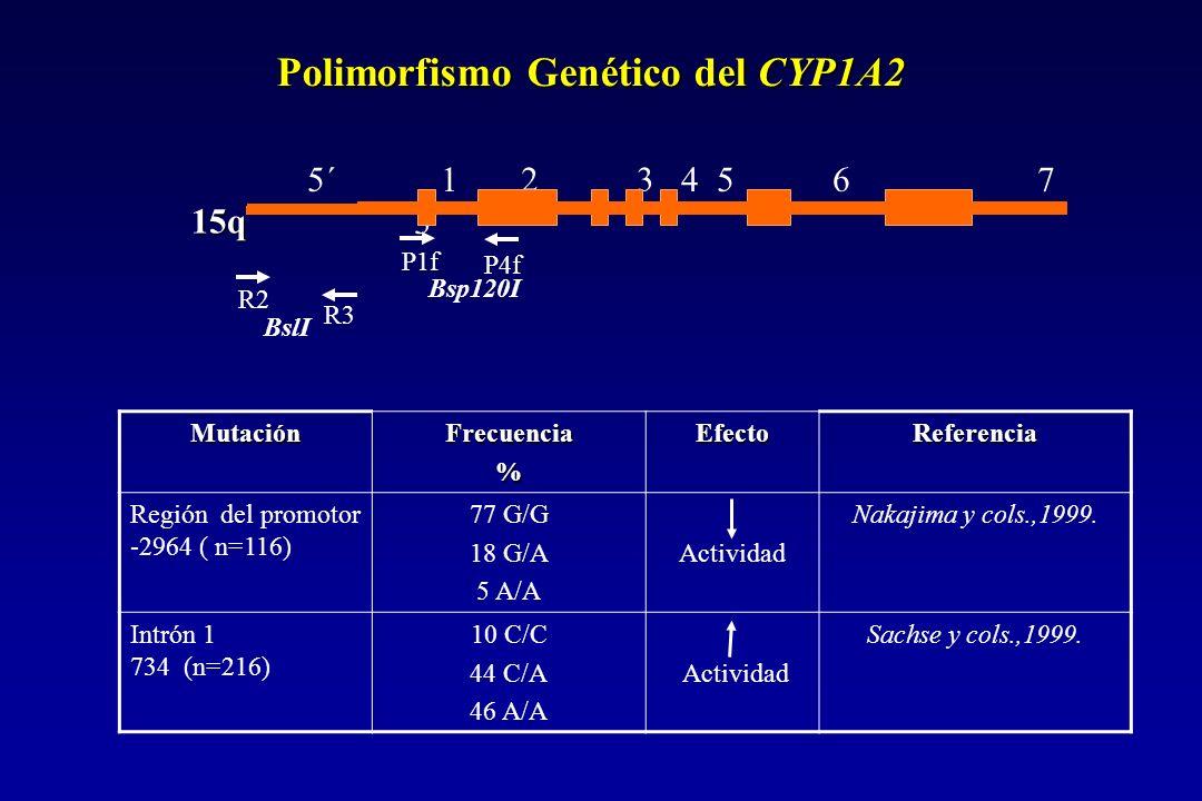 Polimorfismo Genético del CYP1A2 MutaciónFrecuencia%EfectoReferencia Región del promotor -2964 ( n=116) 77 G/G 18 G/A 5 A/A Actividad Nakajima y cols.