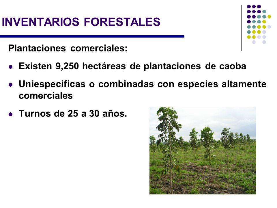 Plantaciones comerciales: Existen 9,250 hectáreas de plantaciones de caoba Uniespecificas o combinadas con especies altamente comerciales Turnos de 25