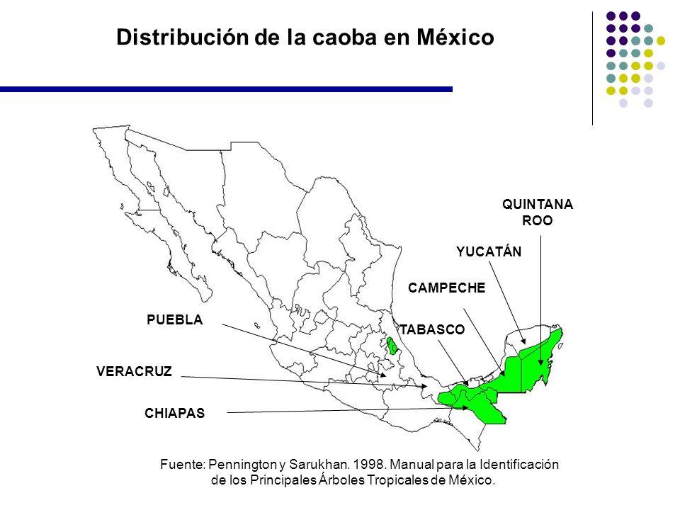 Distribución de la caoba en México QUINTANA ROO YUCATÁN CAMPECHE TABASCO CHIAPAS VERACRUZ PUEBLA Fuente: Pennington y Sarukhan. 1998. Manual para la I