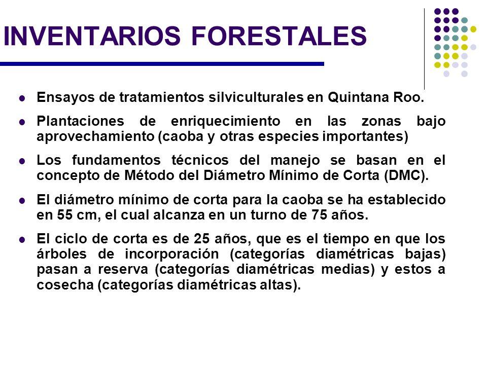 Plantaciones comerciales: Existen 9,250 hectáreas de plantaciones de caoba Uniespecificas o combinadas con especies altamente comerciales Turnos de 25 a 30 años.