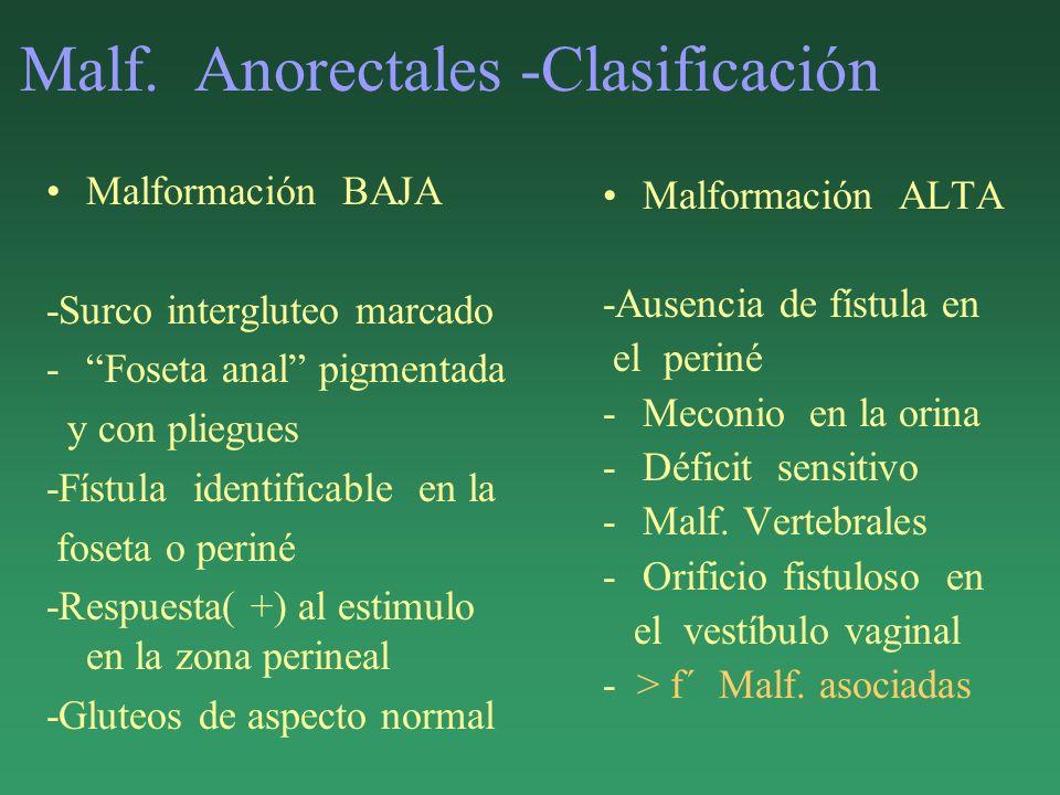 Malf. Anorectales -Clasificación Malformación BAJA -Surco intergluteo marcado -Foseta anal pigmentada y con pliegues -Fístula identificable en la fose