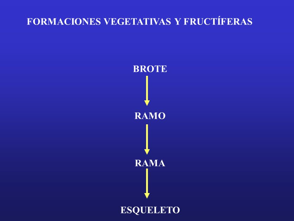 FORMACIONES VEGETATIVAS Y FRUCTÍFERAS BROTE RAMO RAMA ESQUELETO