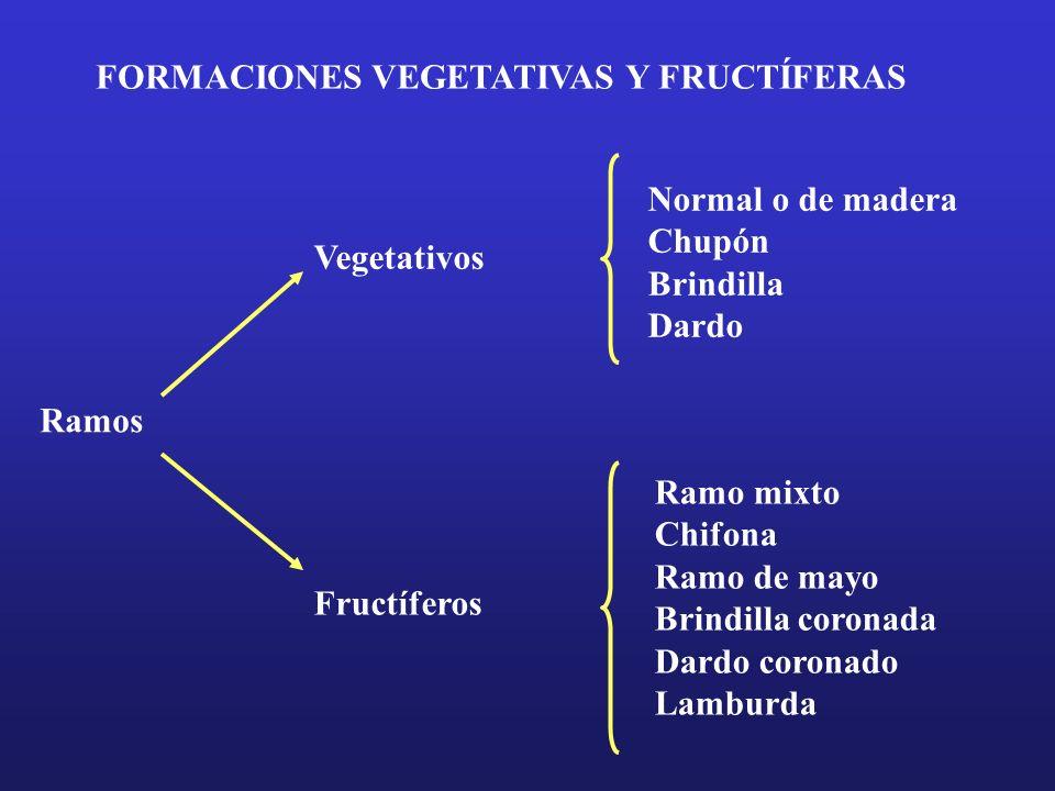 FORMACIONES VEGETATIVAS Y FRUCTÍFERAS Ramos Vegetativos Fructíferos Normal o de madera Chupón Brindilla Dardo Ramo mixto Chifona Ramo de mayo Brindill