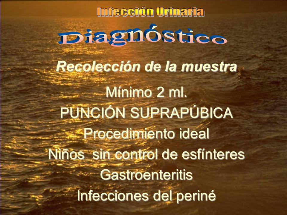 Recolección de la muestra Mínimo 2 ml. PUNCIÓN SUPRAPÚBICA Procedimiento ideal Niños sin control de esfínteres Gastroenteritis Infecciones del periné