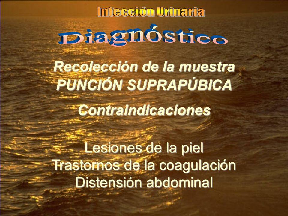Recolección de la muestra PUNCIÓN SUPRAPÚBICA Contraindicaciones Lesiones de la piel Trastornos de la coagulación Distensión abdominal