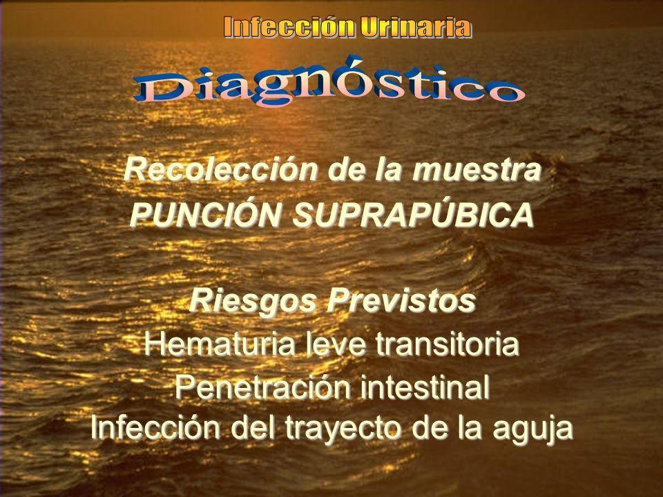 Recolección de la muestra PUNCIÓN SUPRAPÚBICA Riesgos Previstos Hematuria leve transitoria Penetración intestinal Infección del trayecto de la aguja