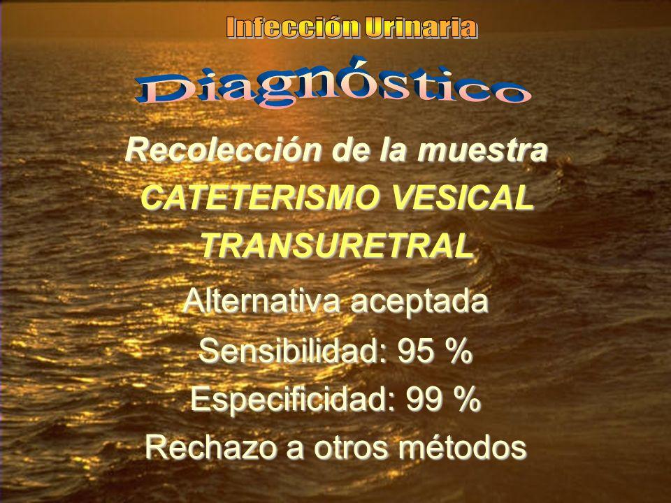 Recolección de la muestra CATETERISMO VESICAL TRANSURETRAL Alternativa aceptada Sensibilidad: 95 % Especificidad: 99 % Rechazo a otros métodos