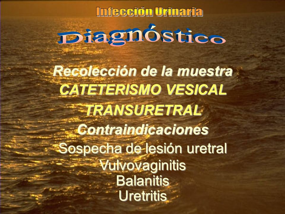 Recolección de la muestra CATETERISMO VESICAL TRANSURETRAL Contraindicaciones Sospecha de lesión uretral VulvovaginitisBalanitisUretritis