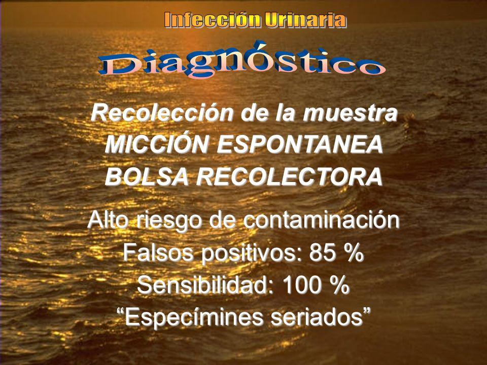 Recolección de la muestra MICCIÓN ESPONTANEA BOLSA RECOLECTORA Alto riesgo de contaminación Falsos positivos: 85 % Sensibilidad: 100 % Especímines ser