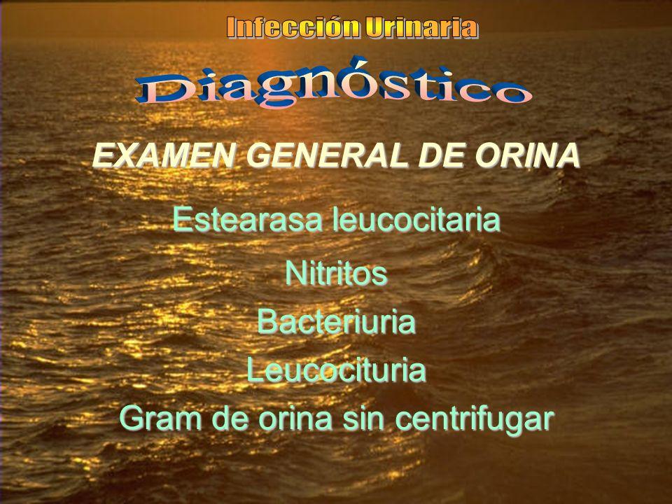 EXAMEN GENERAL DE ORINA Estearasa leucocitaria NitritosBacteriuriaLeucocituria Gram de orina sin centrifugar
