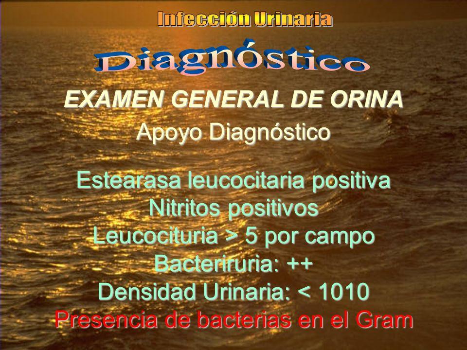 EXAMEN GENERAL DE ORINA Apoyo Diagnóstico Estearasa leucocitaria positiva Nitritos positivos Leucocituria > 5 por campo Bacteriruria: ++ Densidad Urinaria: < 1010 Presencia de bacterias en el Gram