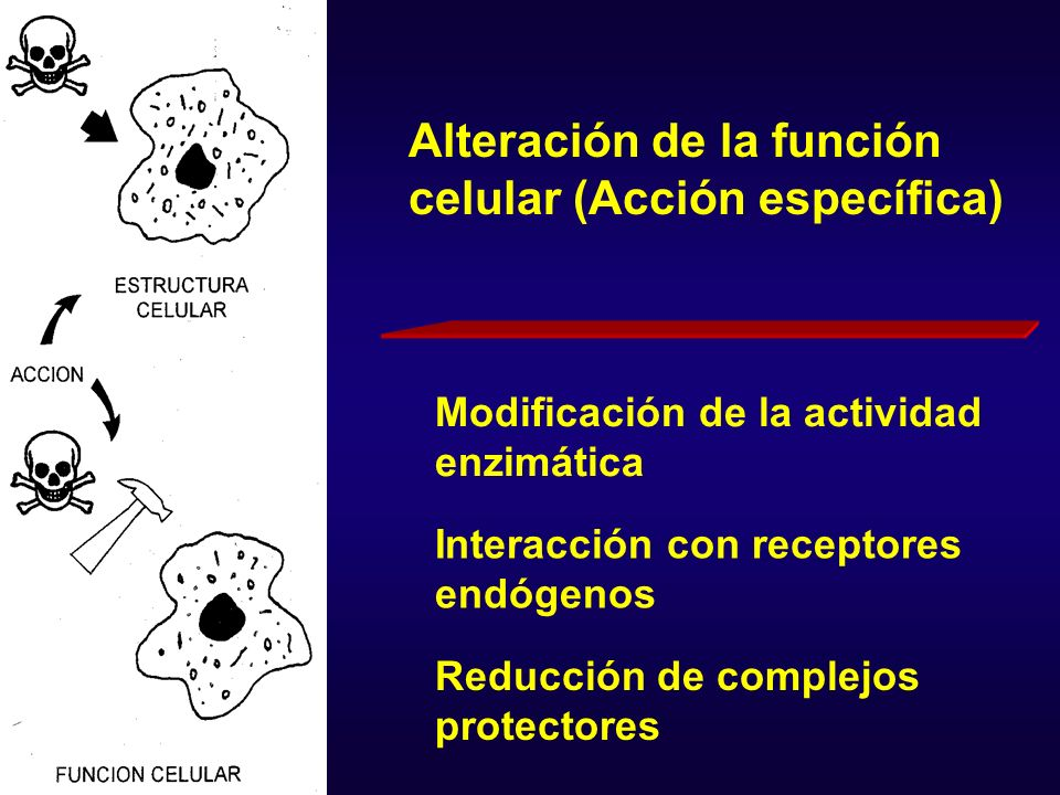 Desacoplamiento de proteínas transportadoras Trastornos de los procesos regulatorios de membrana Modificaciones de la reproducción celular Alteración de la función celular (Acción específica)
