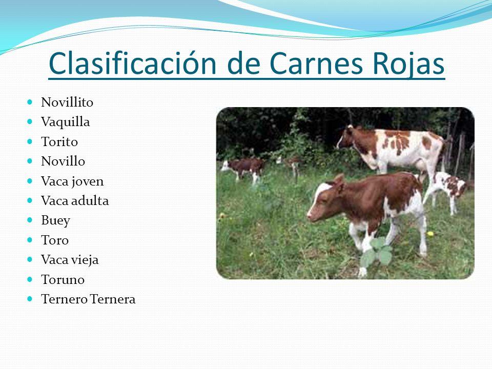 Clasificación de Carnes Rojas Novillito Vaquilla Torito Novillo Vaca joven Vaca adulta Buey Toro Vaca vieja Toruno Ternero Ternera