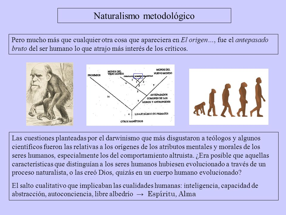 Falacia naturalista La evolución es la supervivencia del más apto (lo natural).