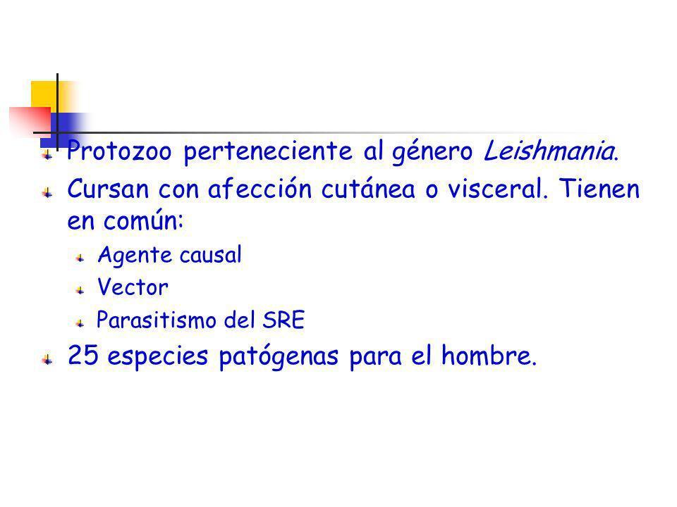 Protozoo perteneciente al género Leishmania. Cursan con afección cutánea o visceral. Tienen en común: Agente causal Vector Parasitismo del SRE 25 espe