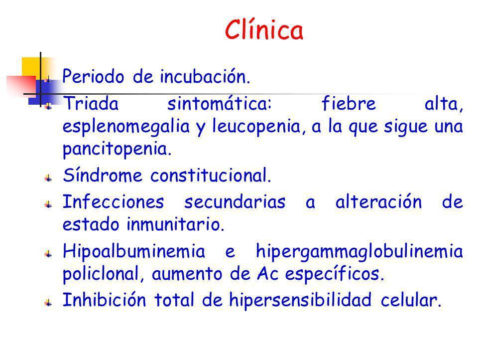 Clínica Periodo de incubación. Triada sintomática: fiebre alta, esplenomegalia y leucopenia, a la que sigue una pancitopenia. Síndrome constitucional.