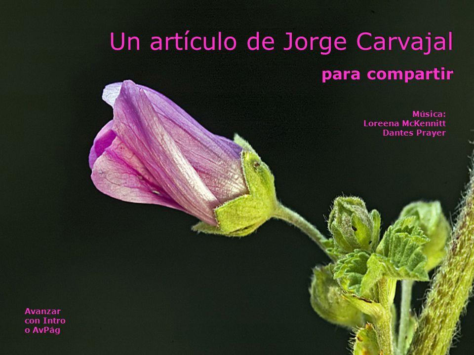 Un artículo de Jorge Carvajal para compartir Un artículo de Jorge Carvajal para compartir Avanzar con Intro o AvPág Música: Loreena McKennitt Dantes Prayer