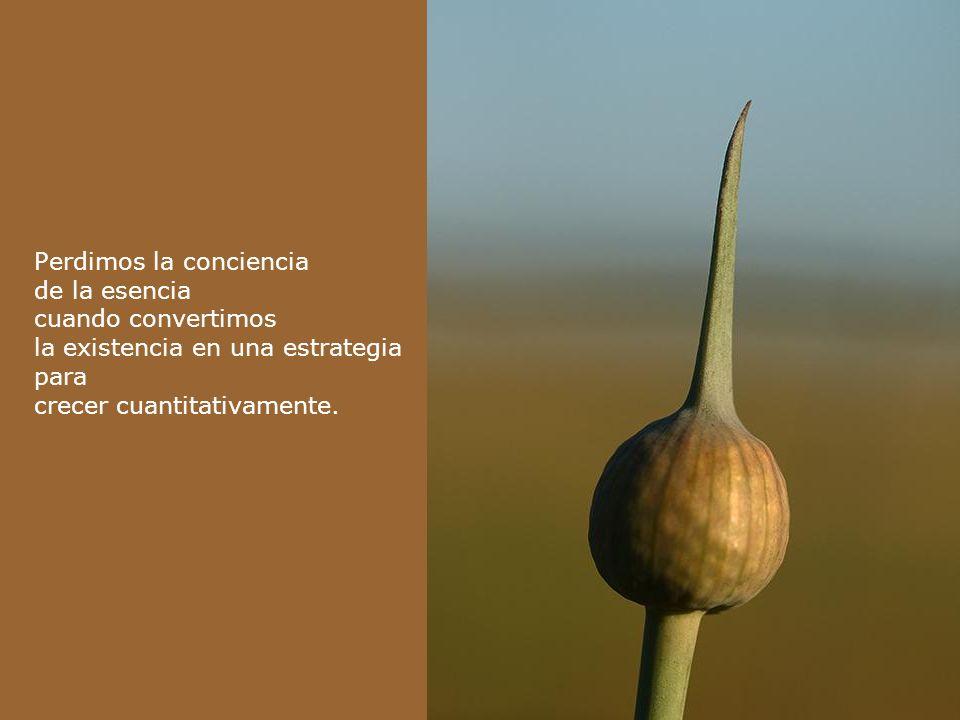Escuchemos la voz de la necesidad, para reconocer que no hay cosecha sin semilla.