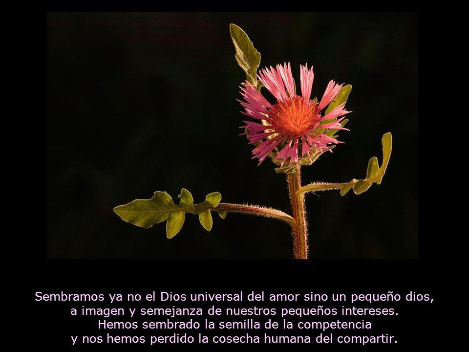 Sembramos ya no el Dios universal del amor sino un pequeño dios, a imagen y semejanza de nuestros pequeños intereses.