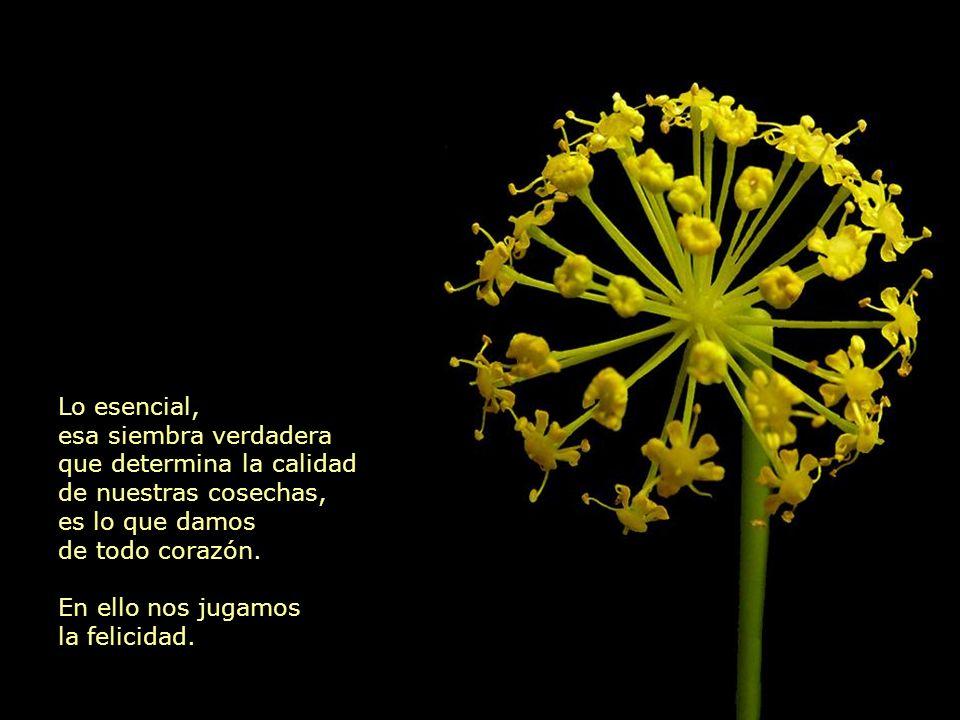 Lo esencial no es el fruto de nuestras acciones, lo verdaderamente sustancial son las semillas.