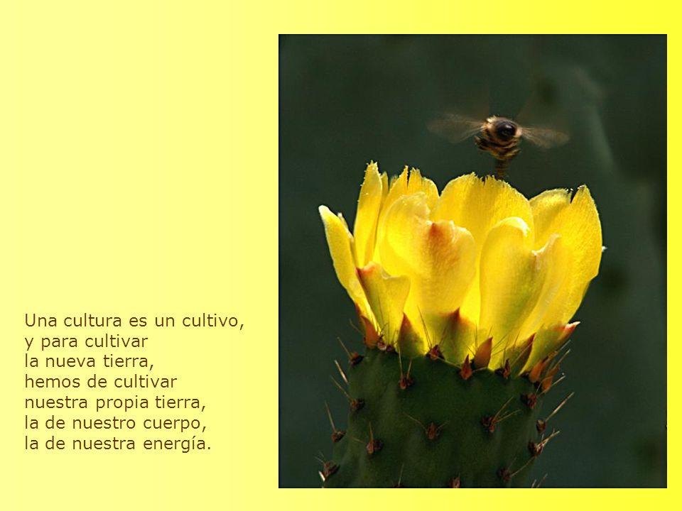 Una cultura es un cultivo, y para cultivar la nueva tierra, hemos de cultivar nuestra propia tierra, la de nuestro cuerpo, la de nuestra energía.