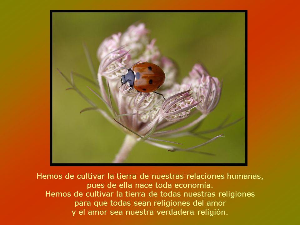 Hemos de cultivar la tierra de nuestras relaciones humanas, pues de ella nace toda economía.