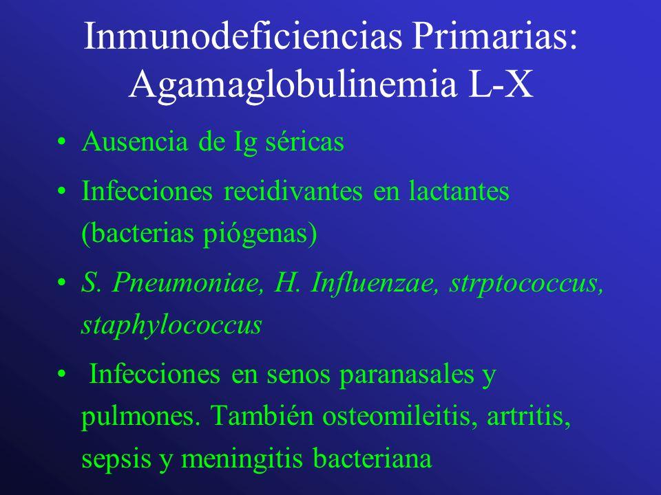 Inmunodeficiencias Primarias: Agamaglobulinemia L-X Ausencia de Ig séricas Infecciones recidivantes en lactantes (bacterias piógenas) S. Pneumoniae, H