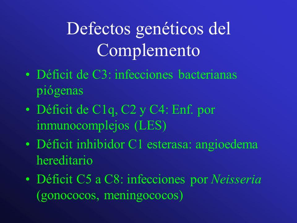 Defectos genéticos del Complemento Déficit de C3: infecciones bacterianas piógenas Déficit de C1q, C2 y C4: Enf. por inmunocomplejos (LES) Déficit inh