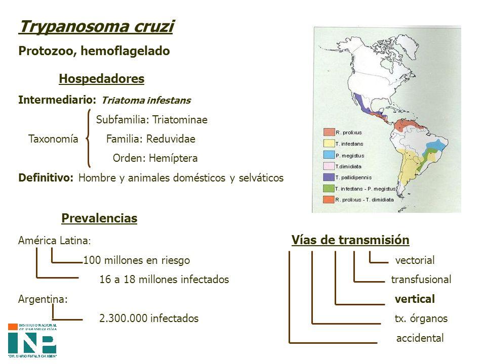 Modalidad evolutiva de la Enfermedad de Chagas con respecto al umbral clínico 95 - 99 %