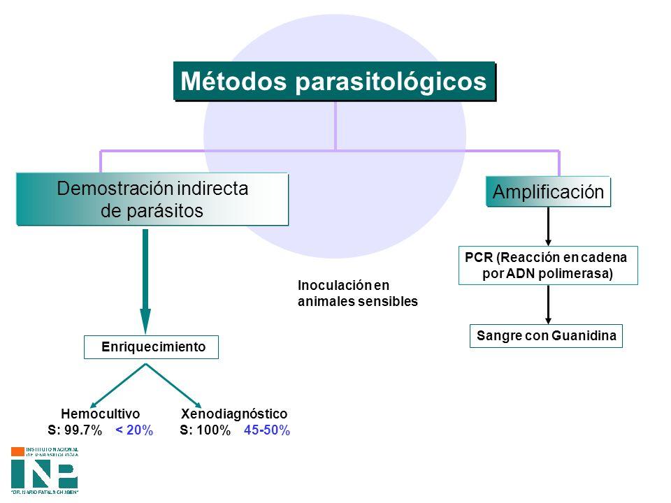 Métodos parasitológicos Amplificación Sangre con Guanidina PCR (Reacción en cadena por ADN polimerasa) Demostración indirecta de parásitos Enriquecimiento Hemocultivo S: 99.7% < 20% Xenodiagnóstico S: 100% 45-50% Inoculación en animales sensibles