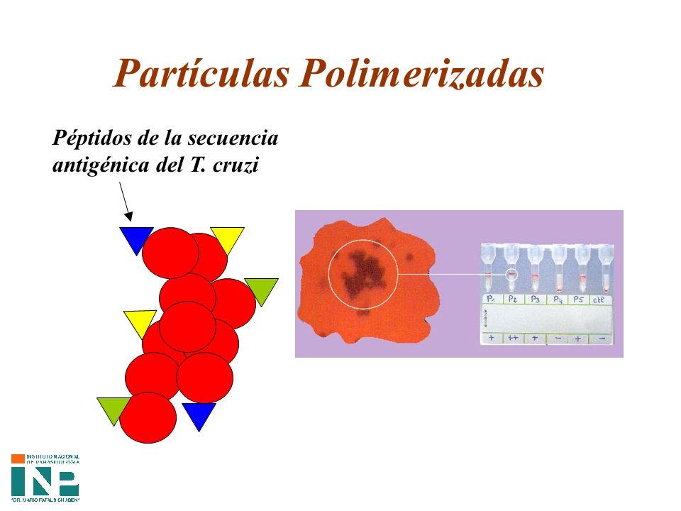 Partículas Polimerizadas Péptidos de la secuencia antigénica del T. cruzi