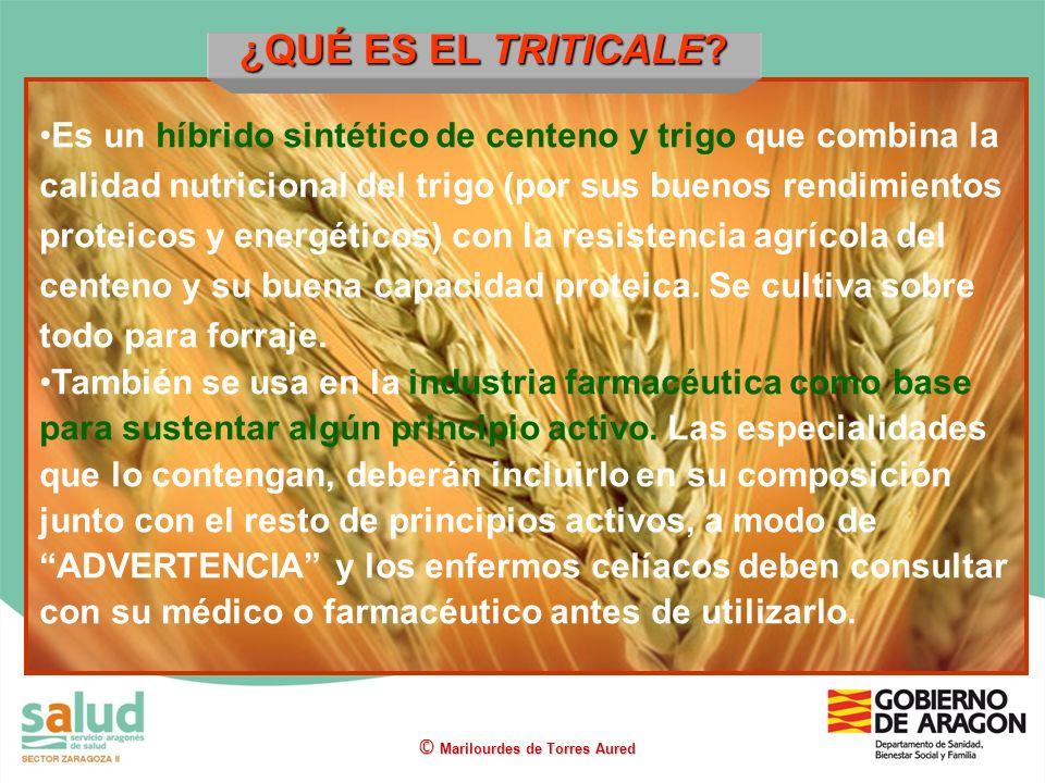 ¿QUÉ ES EL TRITICALE? Es un híbrido sintético de centeno y trigo que combina la calidad nutricional del trigo (por sus buenos rendimientos proteicos y