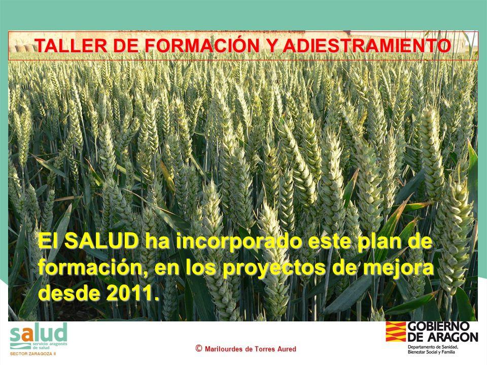 El SALUD ha incorporado este plan de formación, en los proyectos de mejora desde 2011. TALLER DE FORMACIÓN Y ADIESTRAMIENTO © Marilourdes de Torres Au