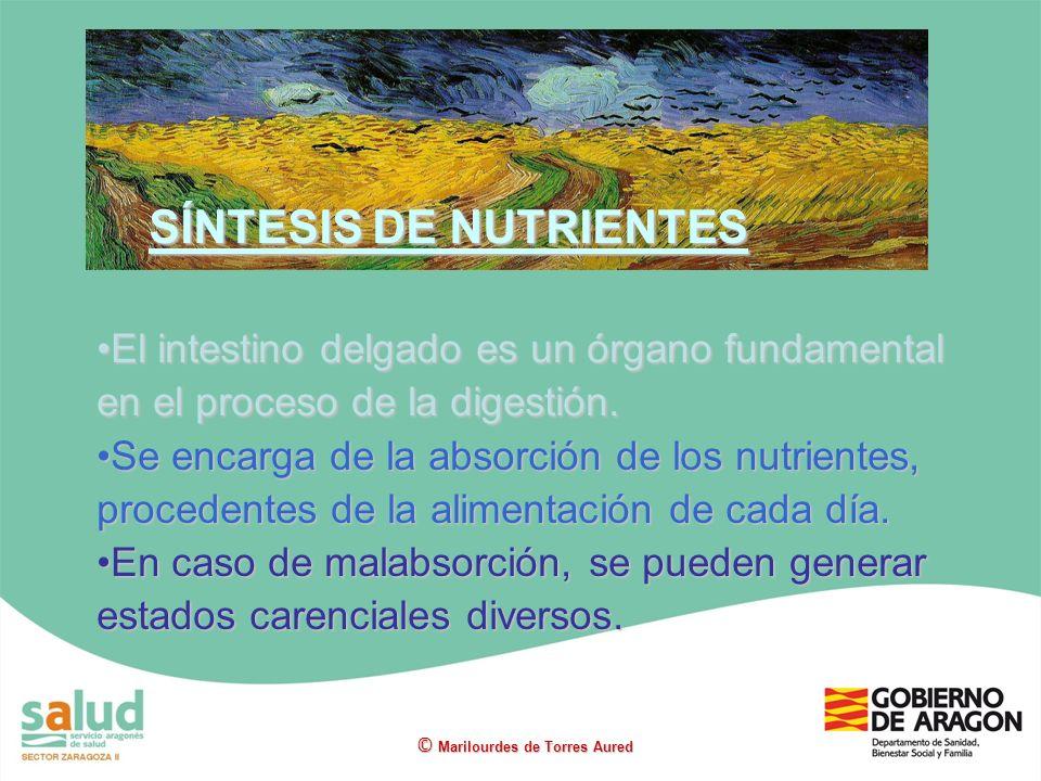 El intestino delgado es un órgano fundamental en el proceso de la digestión.El intestino delgado es un órgano fundamental en el proceso de la digestió