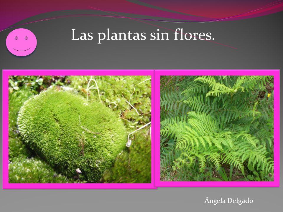 Ángela Delgado Las plantas sin flores.