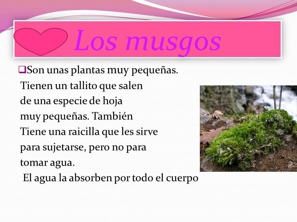 Los musgos Son unas plantas muy pequeñas.