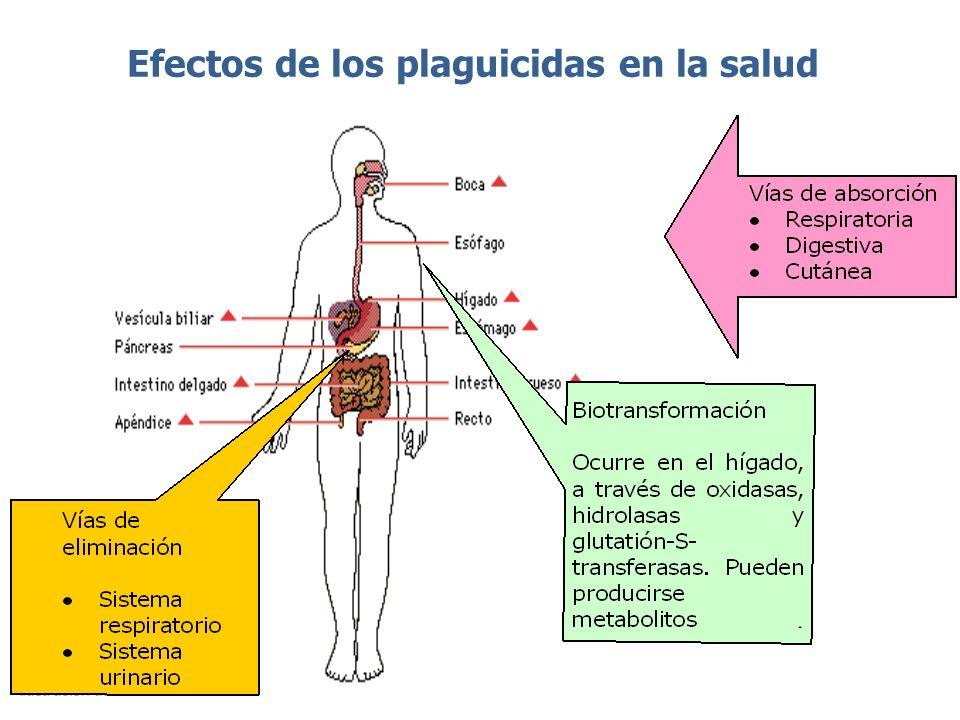 Afecta al sistema reproductor, en especial los que alteran el balance hormonal.