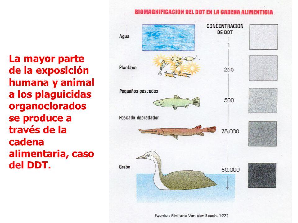 Los niveles de contaminación ambiental por efecto de los plaguicidas químicos son significativos. Fuente: Levitan 1996 % de plaguicida que termina en