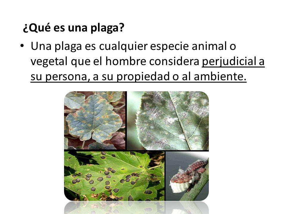 ¿Qué es un plaguicida? Un plaguicida es un compuesto químico o biológico que se usa para matar plagas que ponen en riesgo la salud pública o que daña