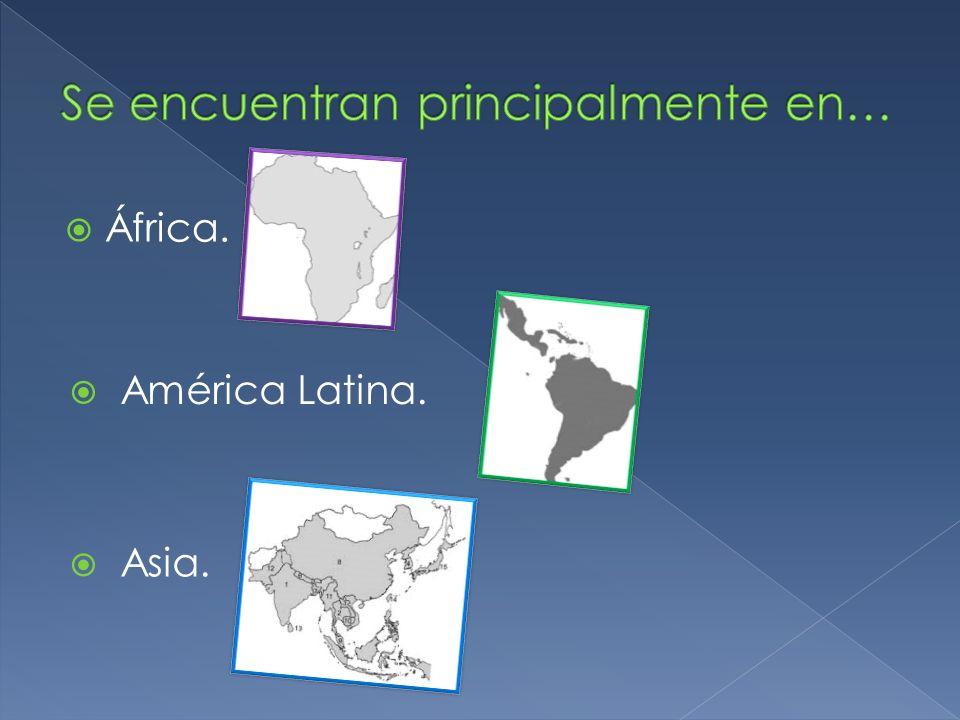 África. América Latina. Asia.