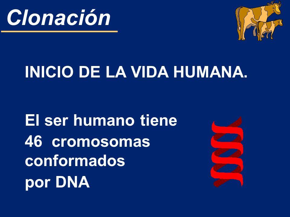 Clonación INICIO DE LA VIDA HUMANA. El ser humano tiene 46 cromosomas conformados por DNA