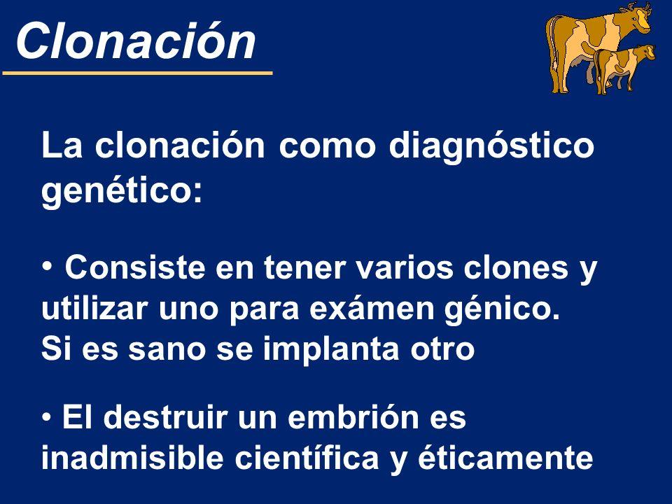 Clonación La clonación como diagnóstico genético: Consiste en tener varios clones y utilizar uno para exámen génico. Si es sano se implanta otro El de